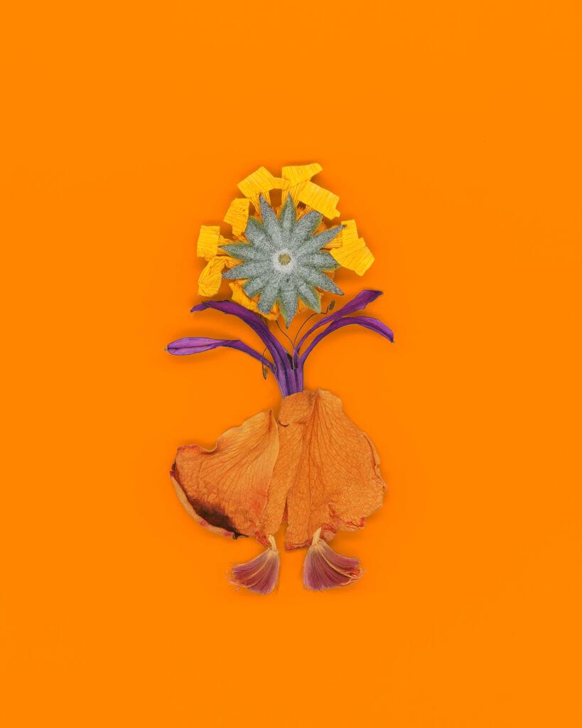 fleurs séchées, couverture de livre pour enfant par charlotte moricand