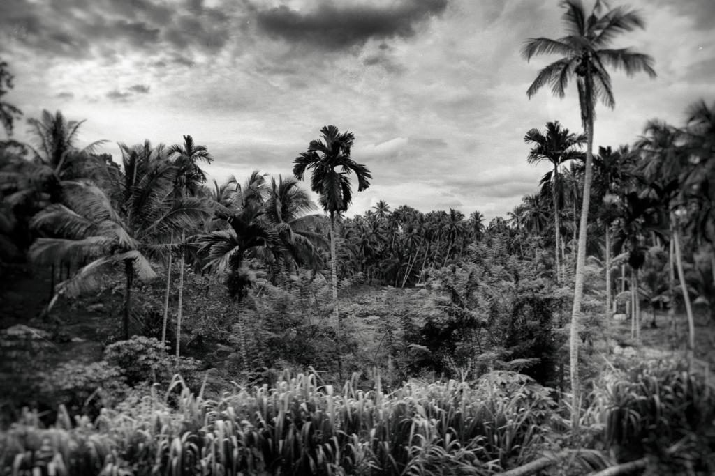 Ceylon Diary par Lucie Hodiesne Darras